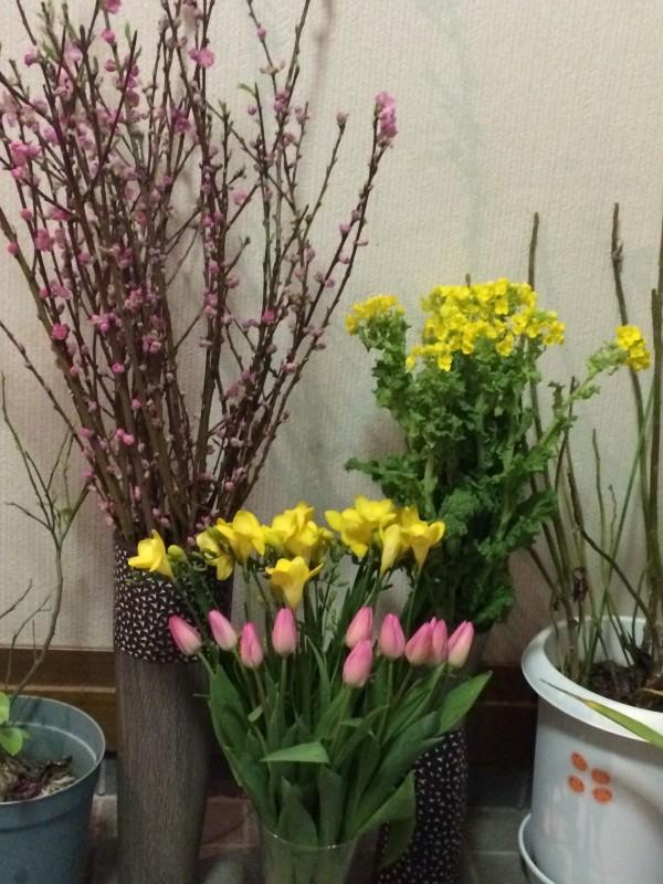 春の便りが届きました🌼
